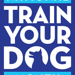 Train Your Dog Month Behavior Focus: May I Pet Your Dog?